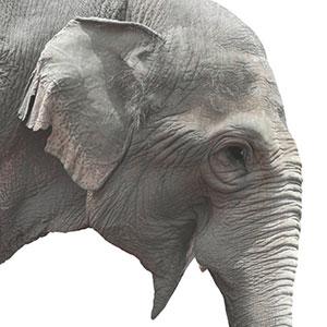 SwickTech Flyer - Elephant