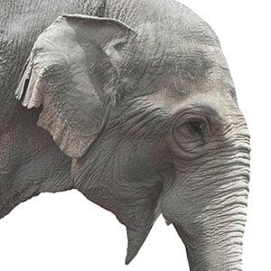 SwickTech Flyer Elephant